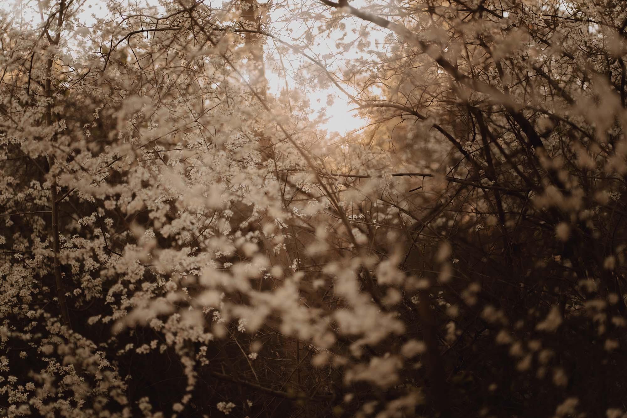 Wiosenna sesja ciazowa kielce00004 - Wiosenna sesja ciążowa