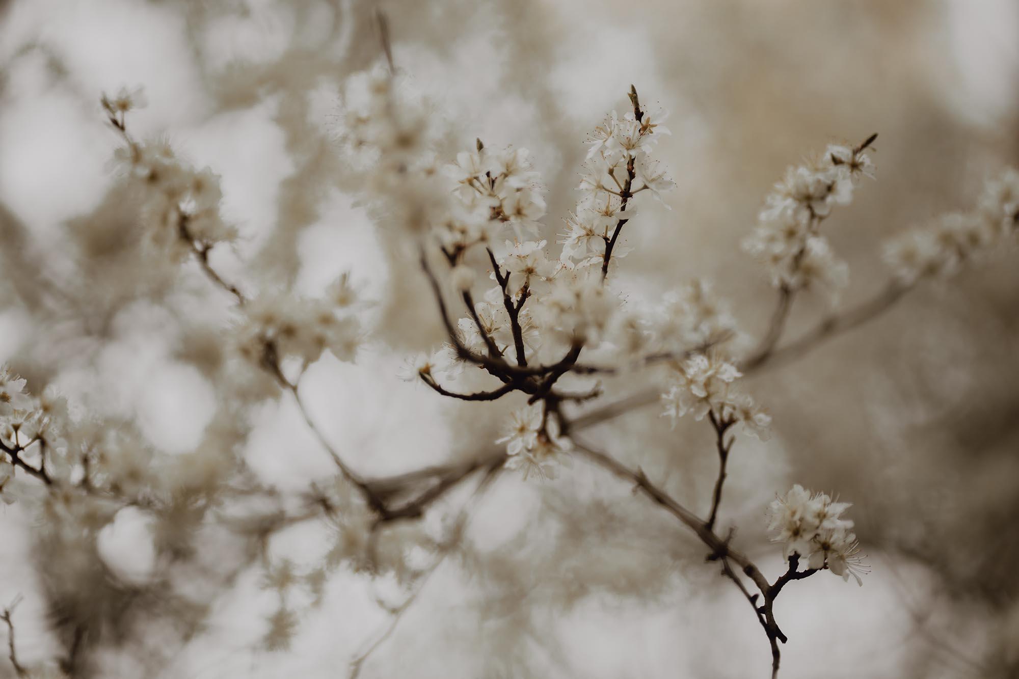 Wiosenna sesja ciazowa kielce00038 - Wiosenna sesja ciążowa